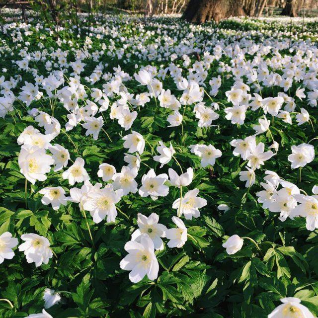 visithelsingborg vscoflowers helsingborg lingwallphotography