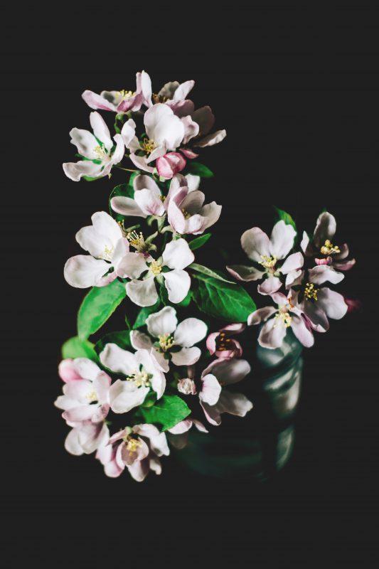 Äppelblom av Charlotta Lingwall